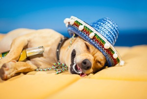cinco dog